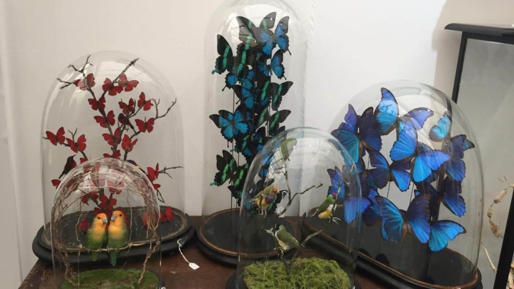 Butterfly Cloches