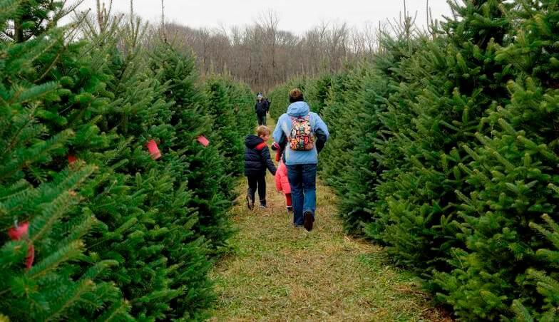 Dirr Nurseries Christmas Tree Farm