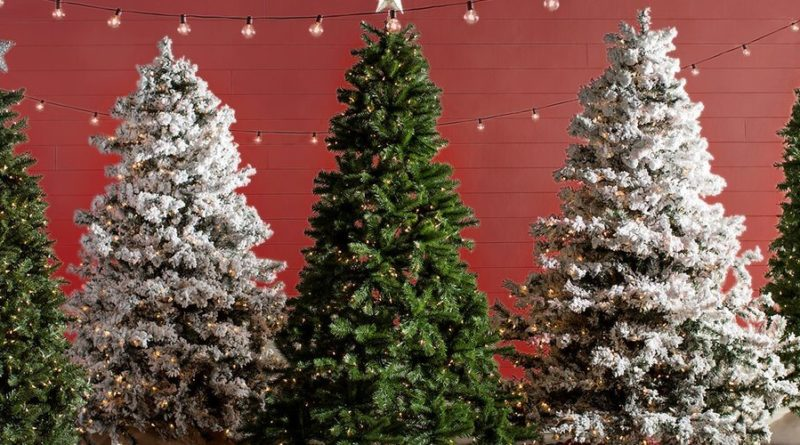 12 best christmas tree farms in usa for perfect christmas trees live enhanced - Best Live Christmas Trees