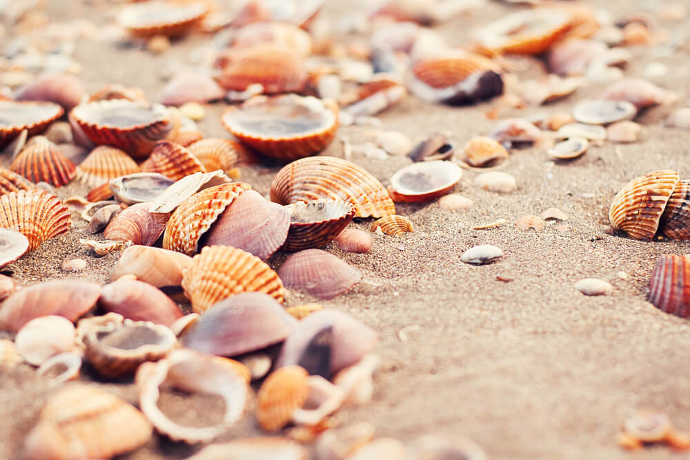 Collect Seashells at the Beach-travel bucket list