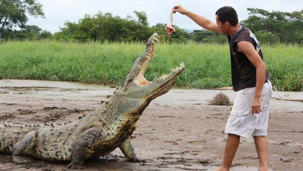 Feed a crocodile-travel bucket list