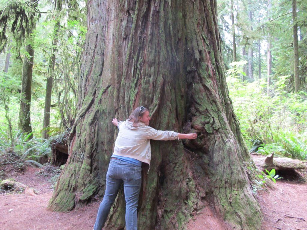 Hug a redwood-travel bucket list