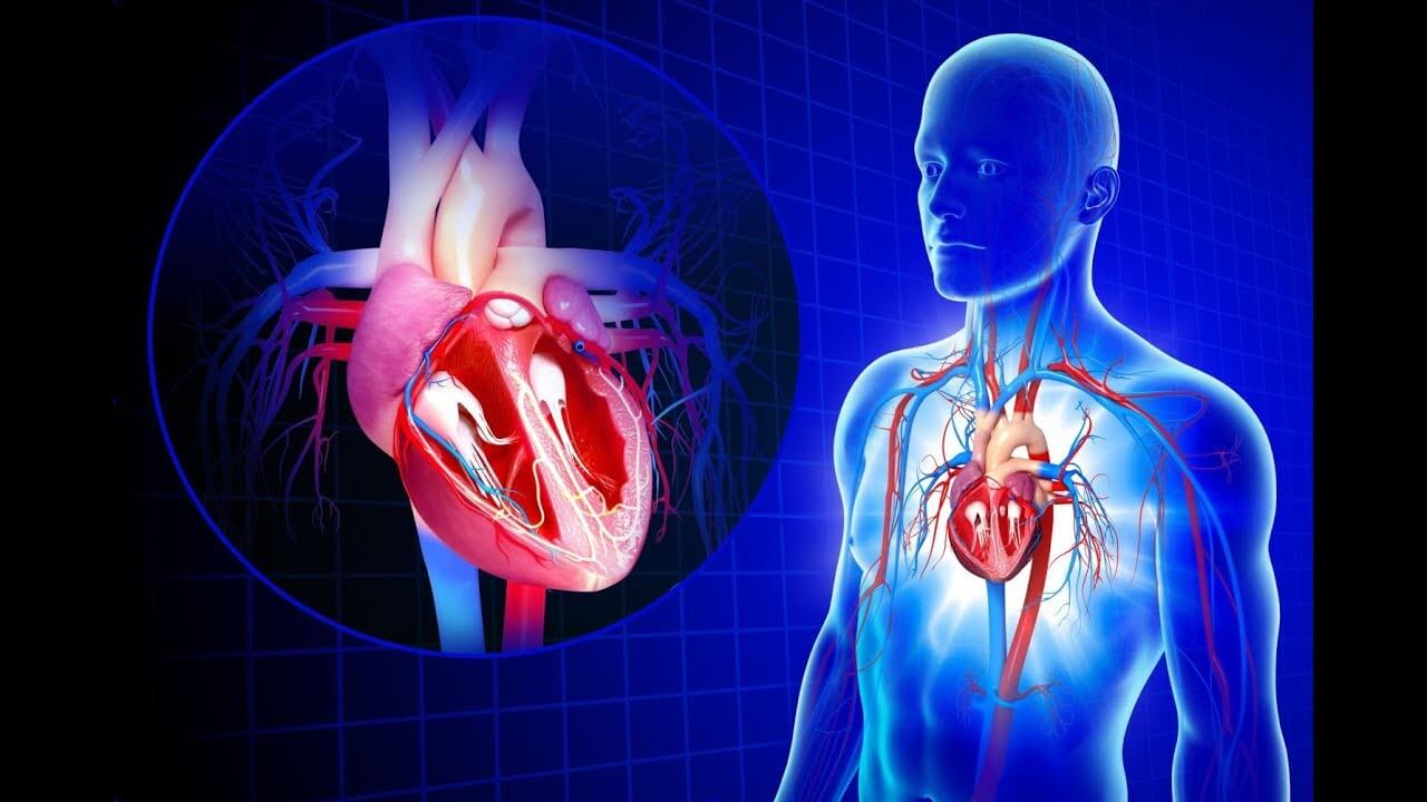 5 Health Complications You Can Get Due To Your Alcohol Addiction - Cardiovascular System
