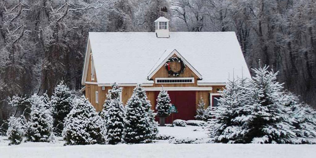 Clark's Christmas Tree Farm