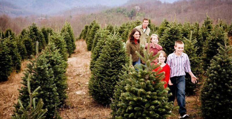Daniel Christmas Tree Farms