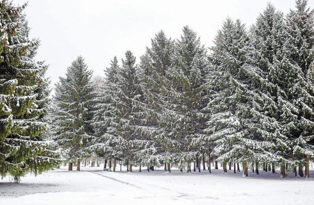 Owasso Christmas Tree & Berry Farm