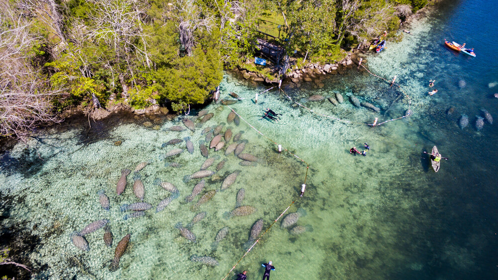 Crystal River most beautiful places To visit In florida