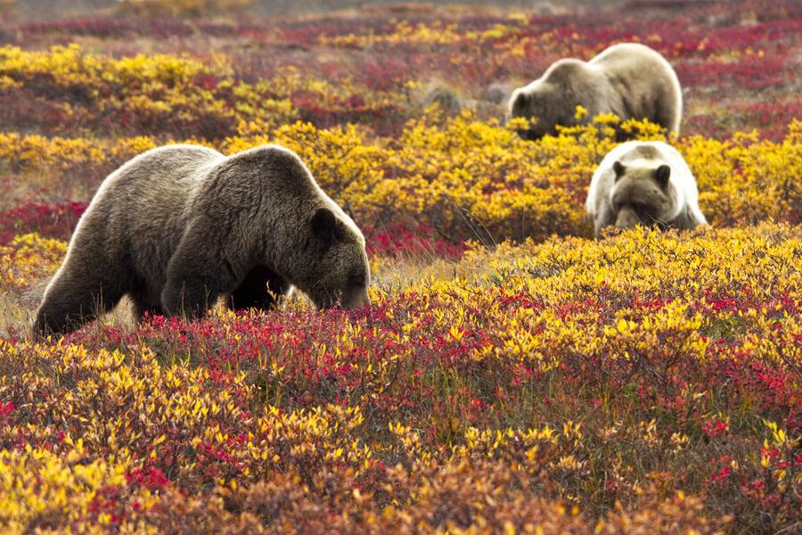 Denali National Park Preserve