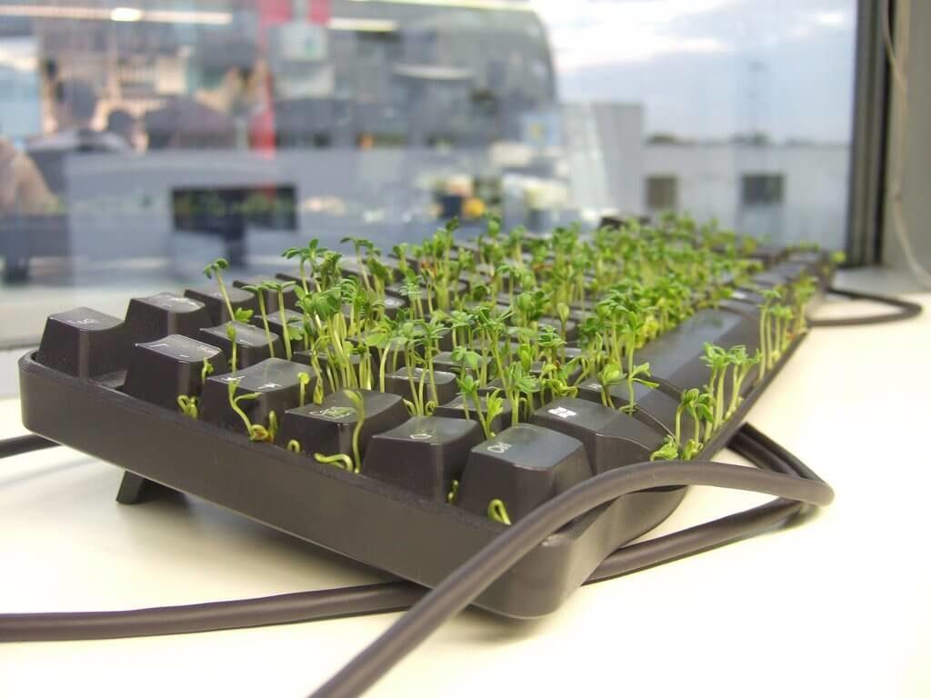 Plant a Grass Garden in Keyboard