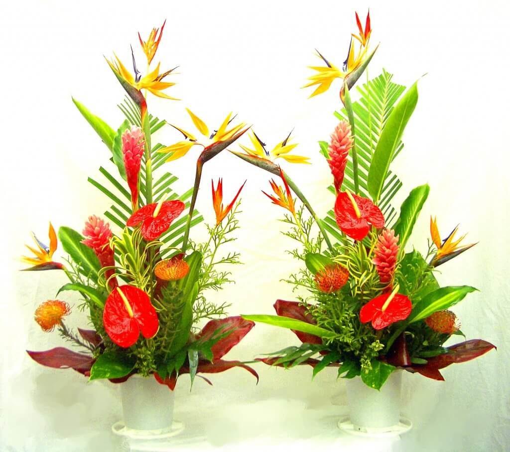 Tropical Arrangement