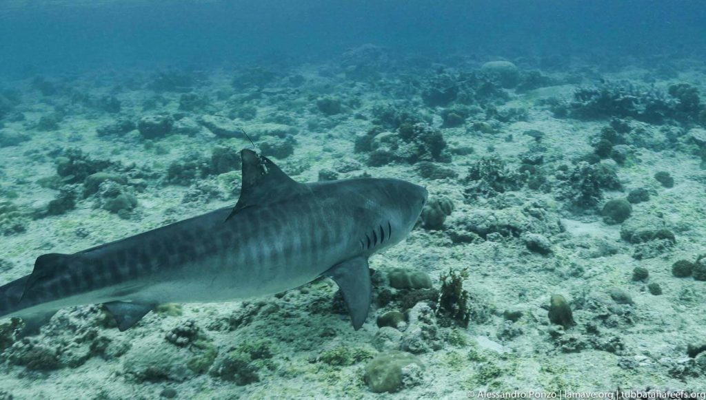 Tubbataha Reefs Natural Park tourist spots in the philippines