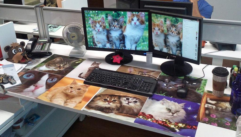 Cat on Office Desk Prank
