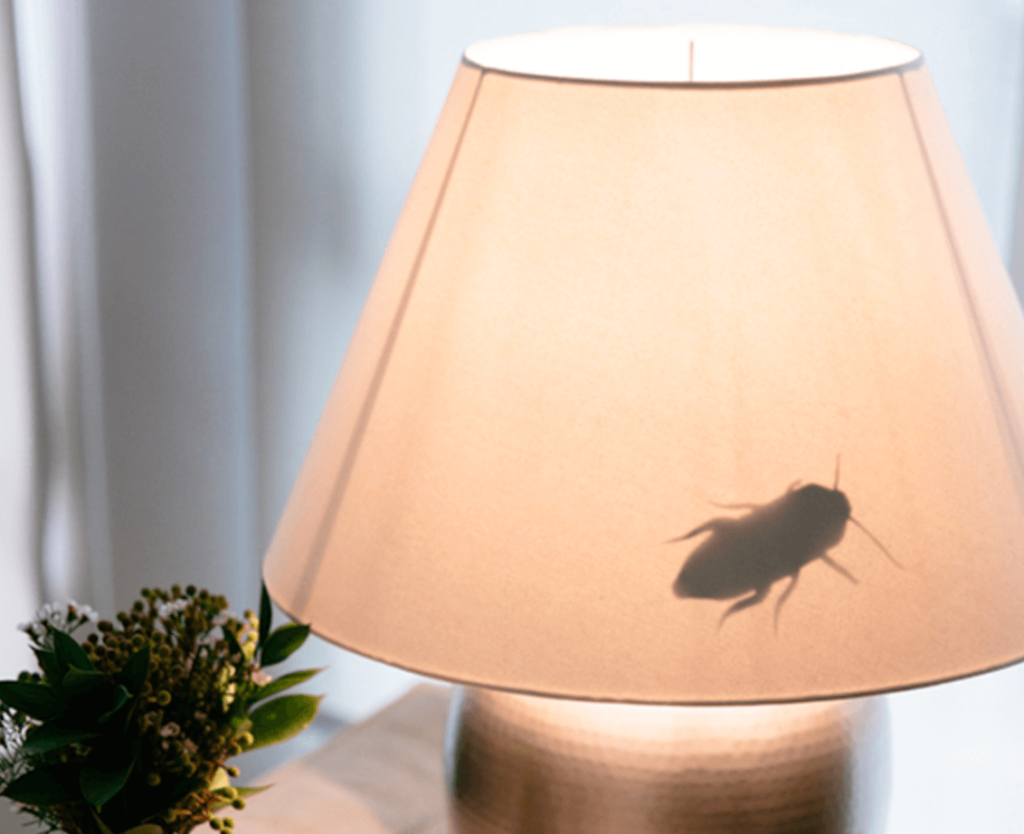 """Put a """"Giant Beetle Behind Lamp Shade"""