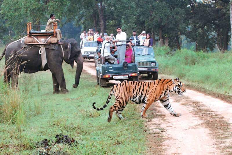 Corbett National Park - tourist places in india