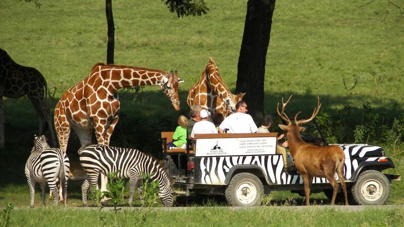Go on a safari-travel bucket list
