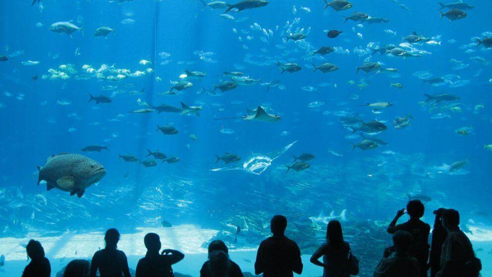 Go to an aquarium-travel bucket list