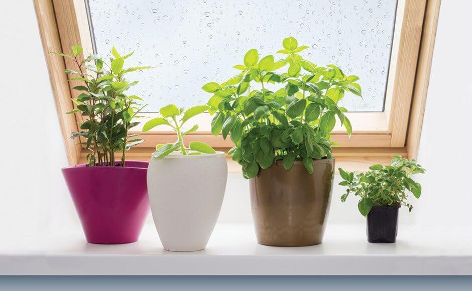 Pop Quiz diy flower pot