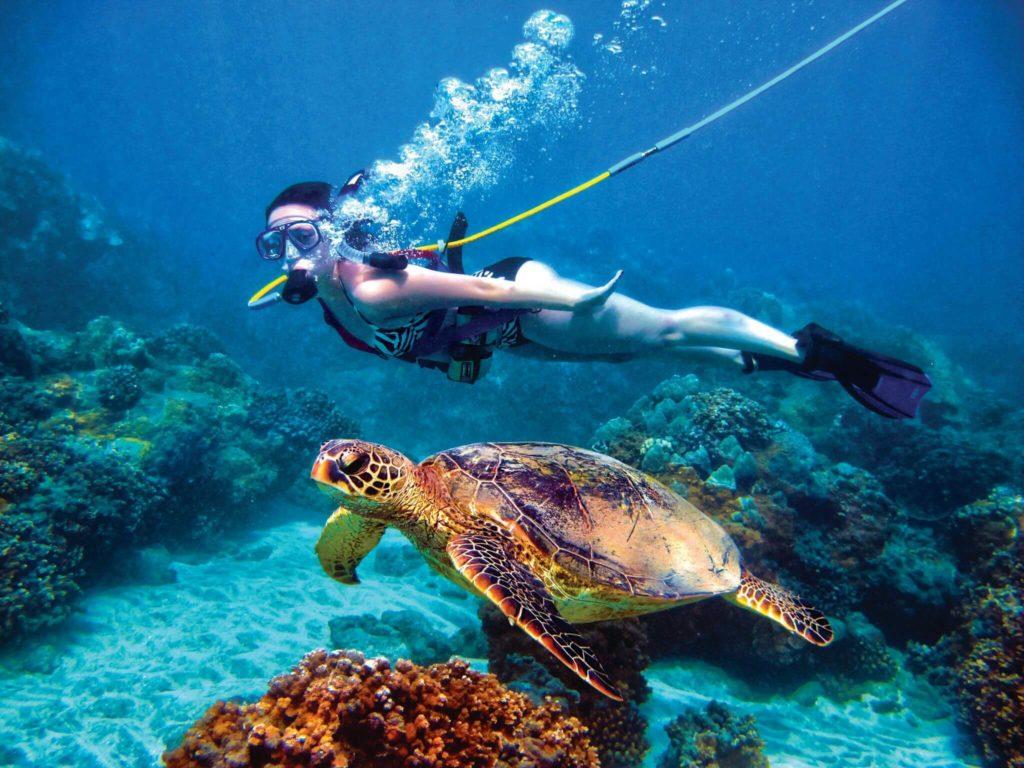 Swim with turtles-travel bucket list