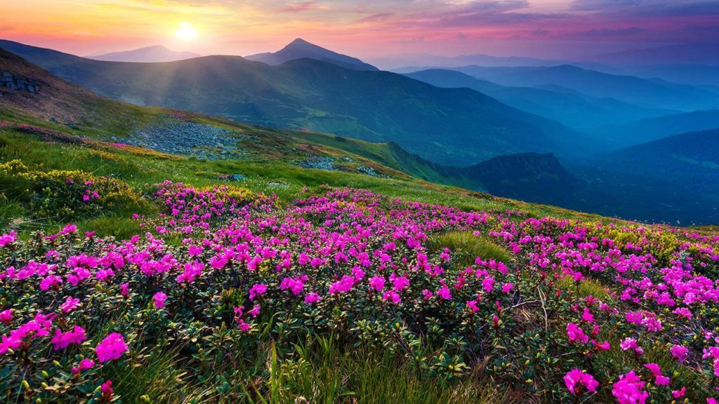 The Valley of Flowers in Uttarakhand - tourist places in india