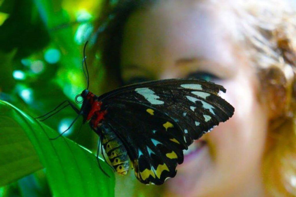 Visit a butterfly sanctuary-travel bucket list