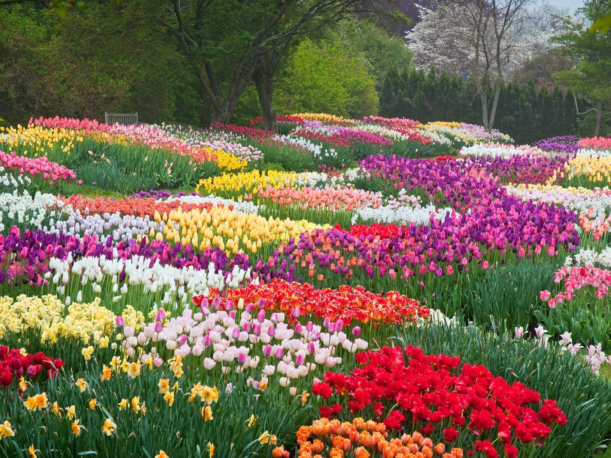 51 Beautiful Flower Garden Pictures Of 2018 Liveenhanced Live