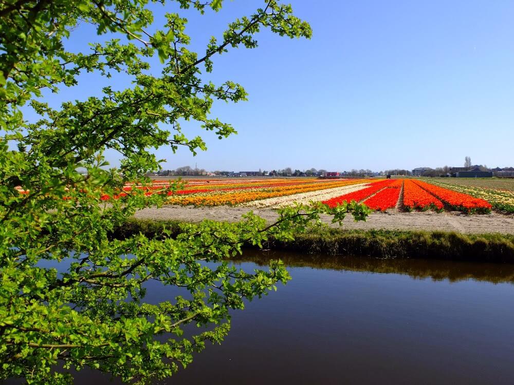beautiful flower garden pictures