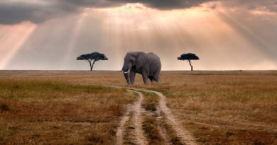 Safari-Travel-Guide-Travel-Tips