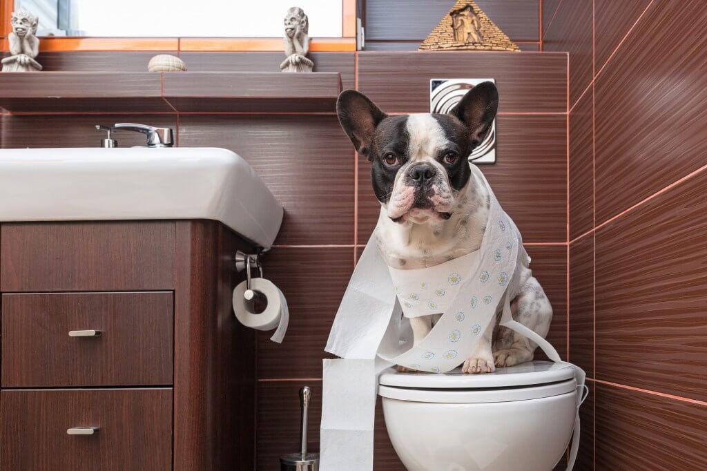 General Dog Care