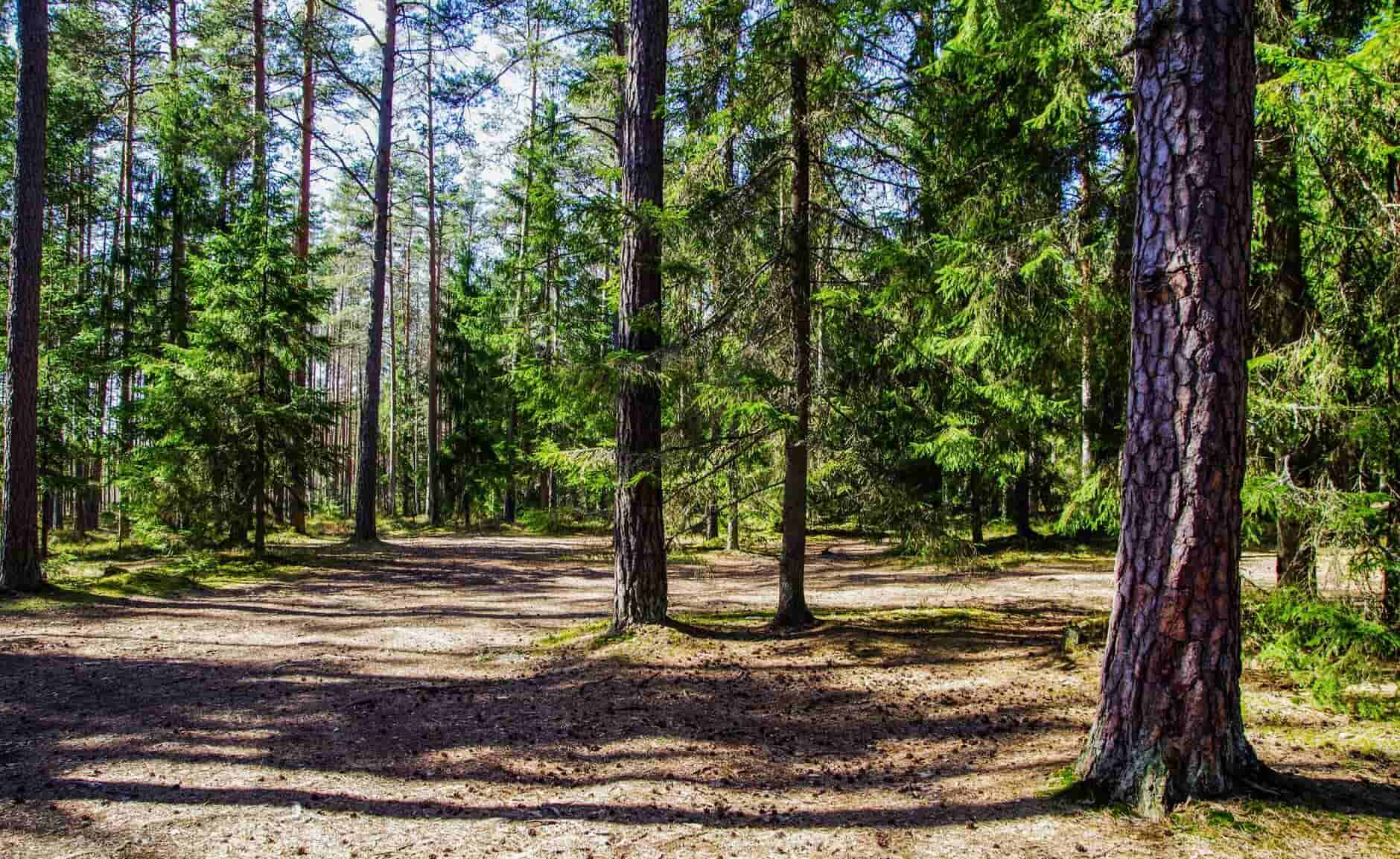 5 Tree Removal Tips from a Local Tree Service Company