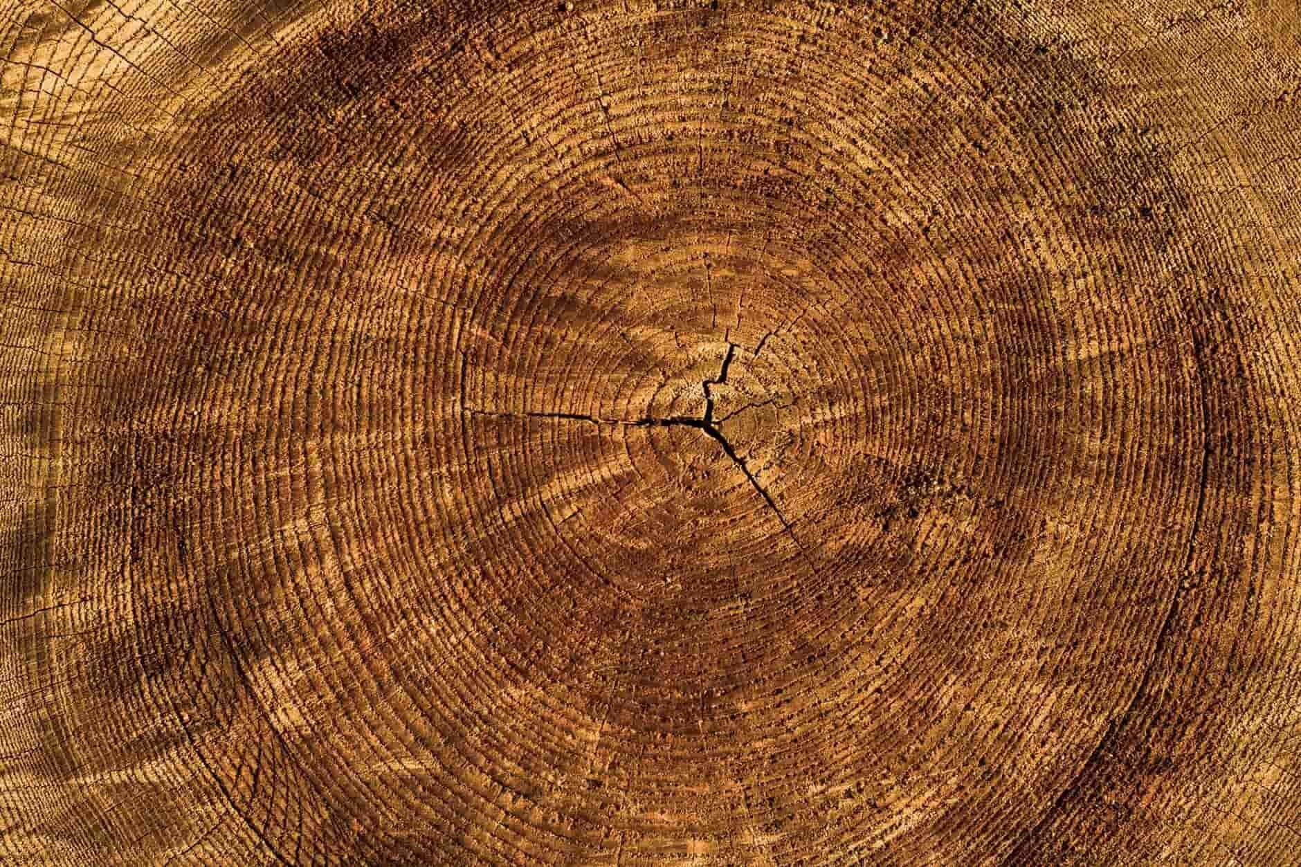 Cracks in wood