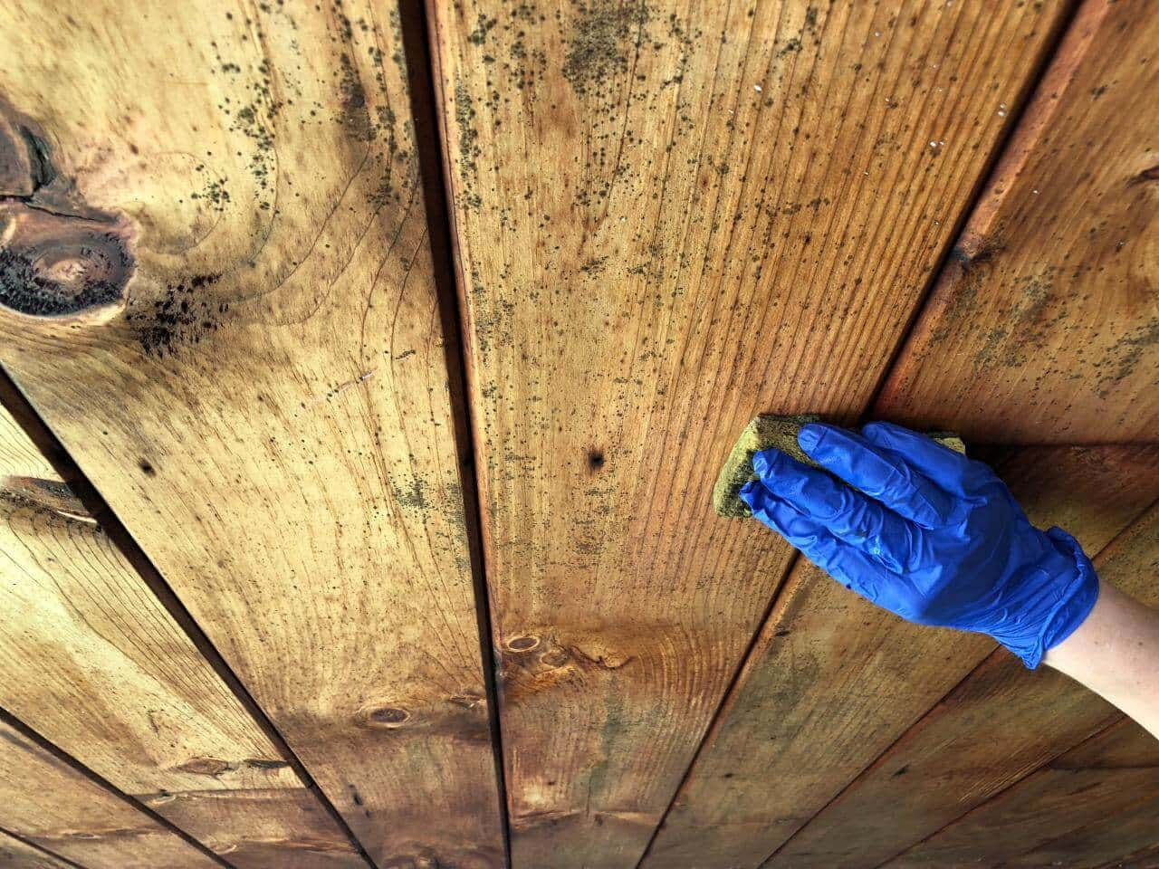 Wooden Mold Growth