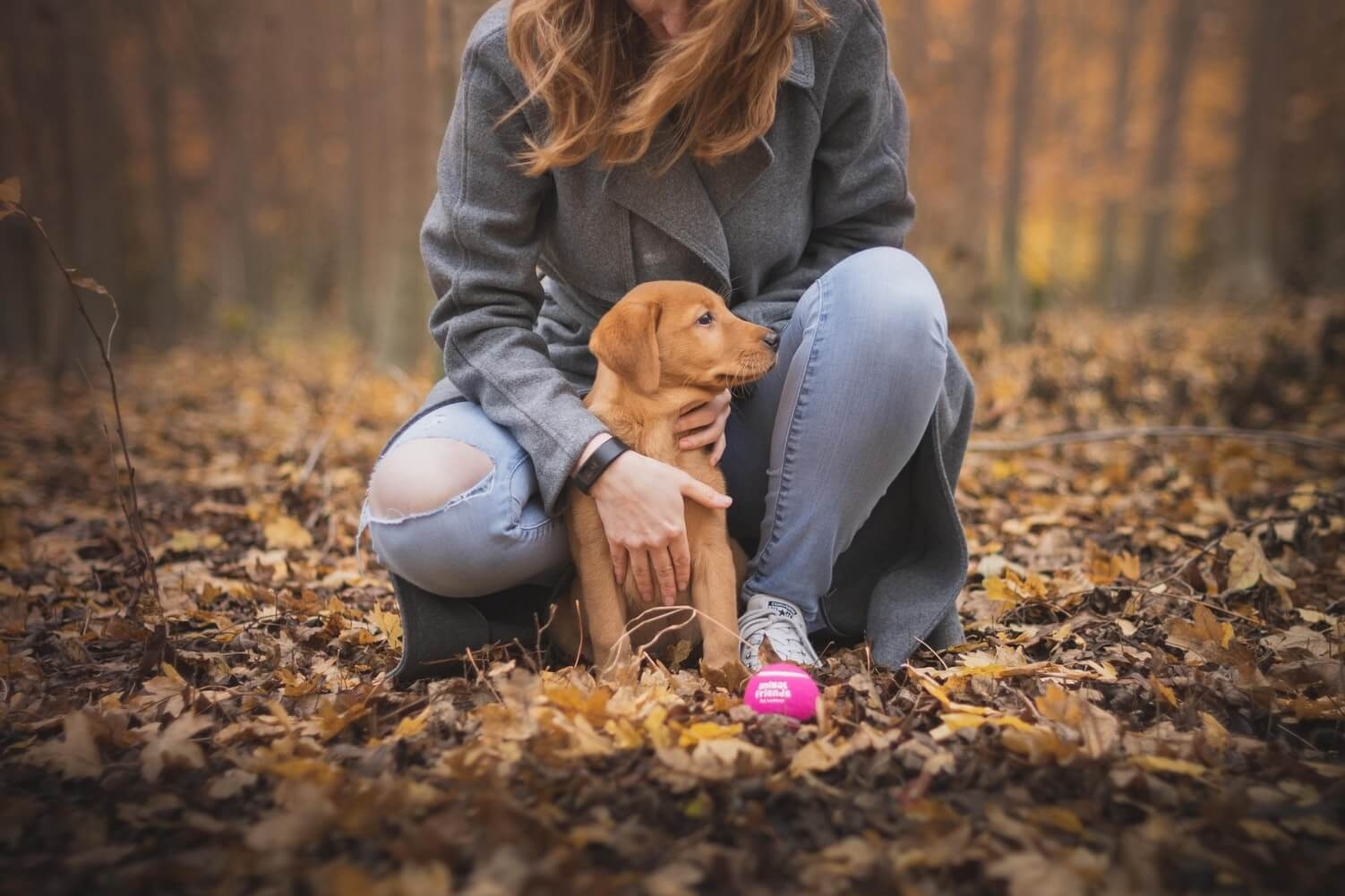 puppy training 2