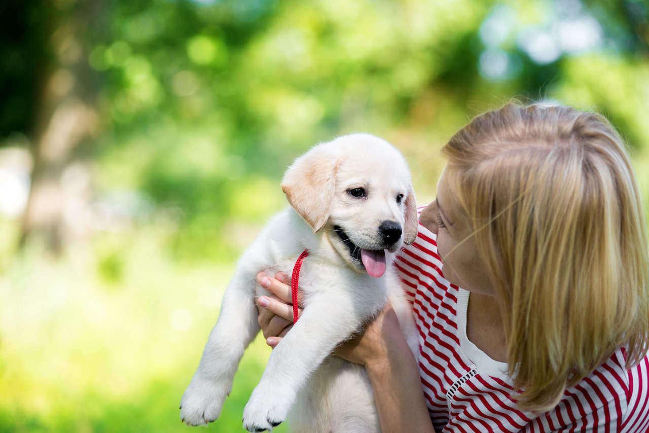puppy training 4