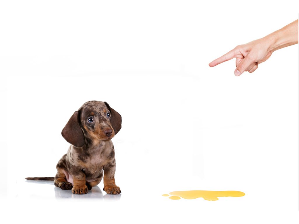 puppy training 6