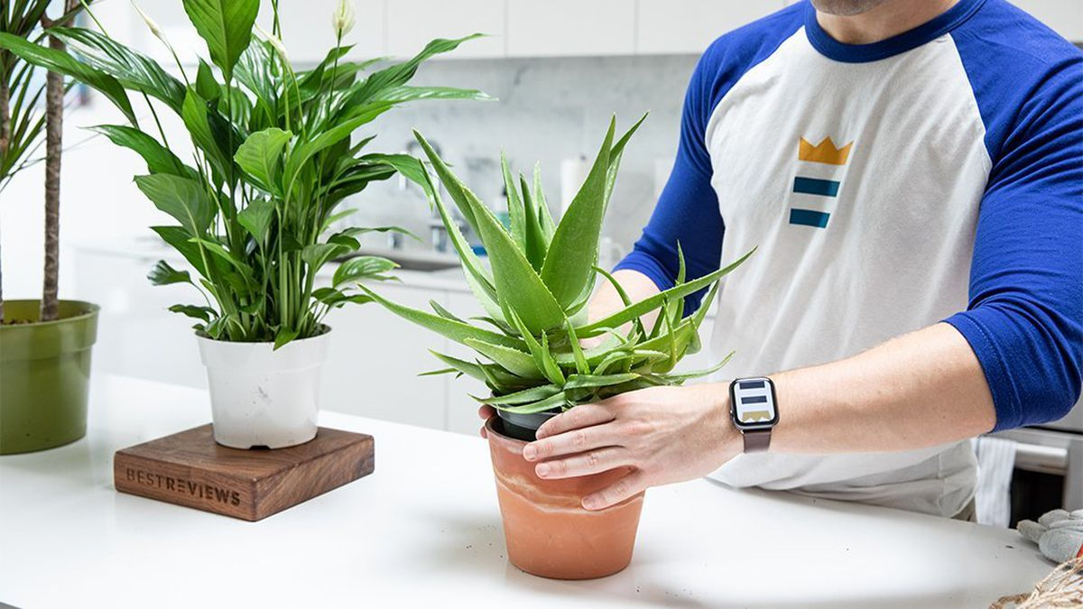 Grow your own plants