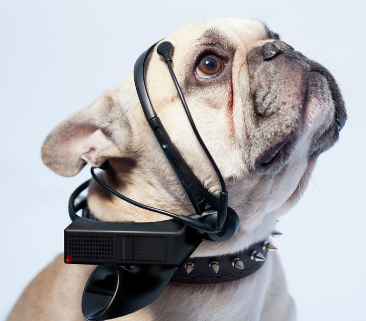 A device that translates animal thoughts into human language
