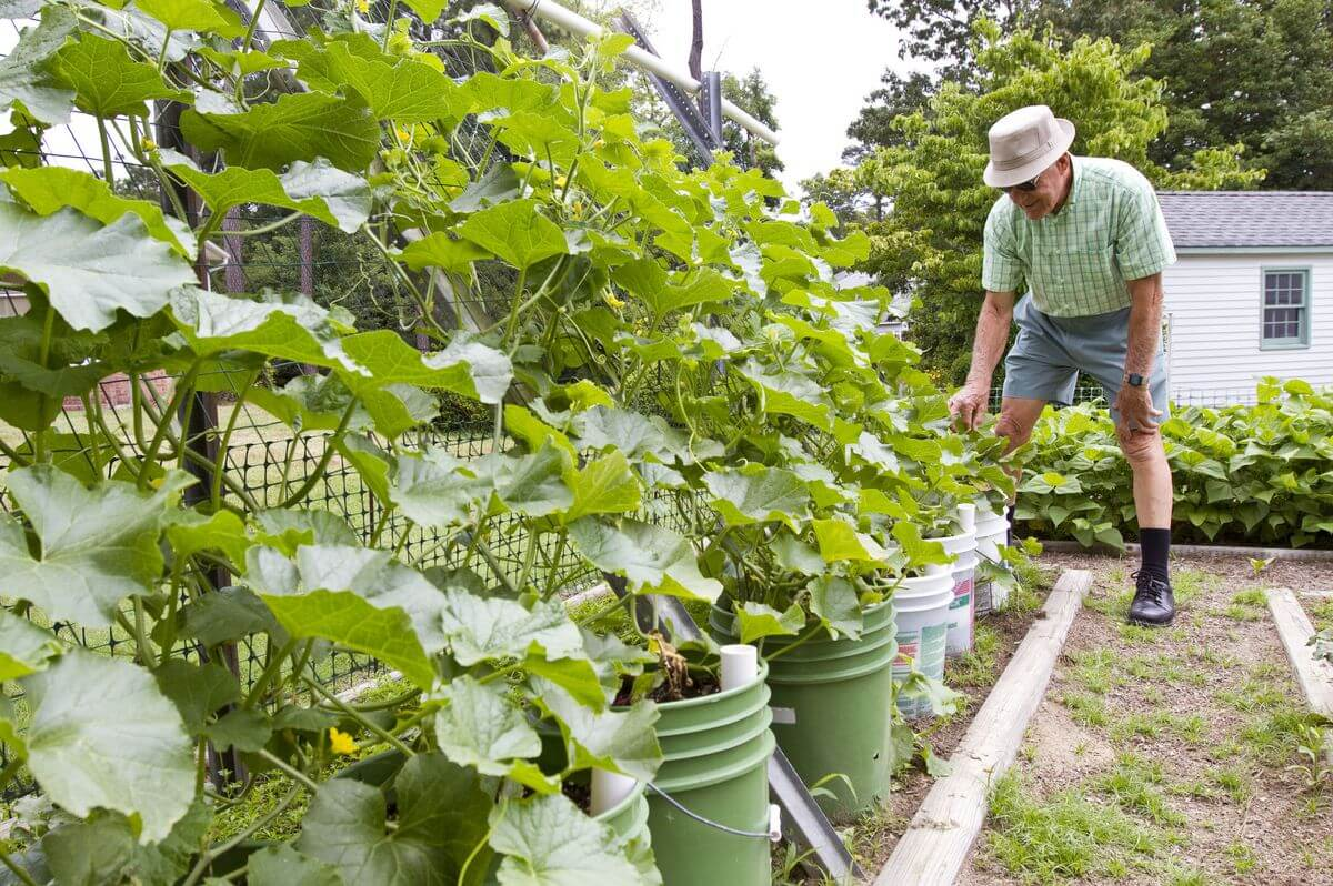 Buckets or Pails planting