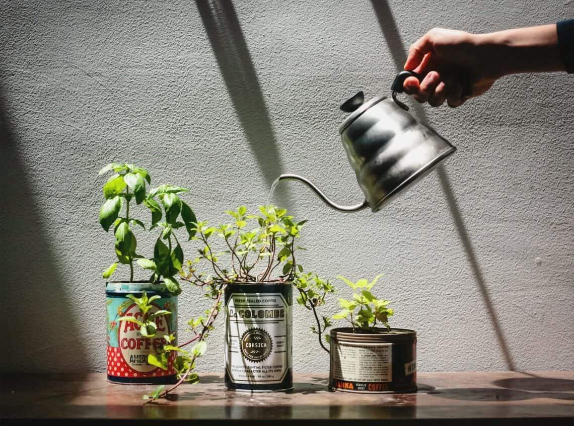 Mint Tins planting