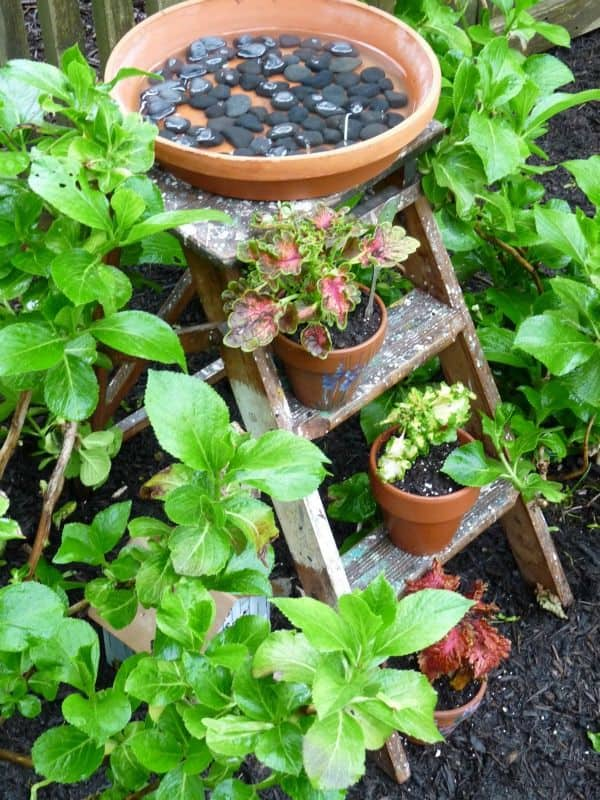 bird bath pot