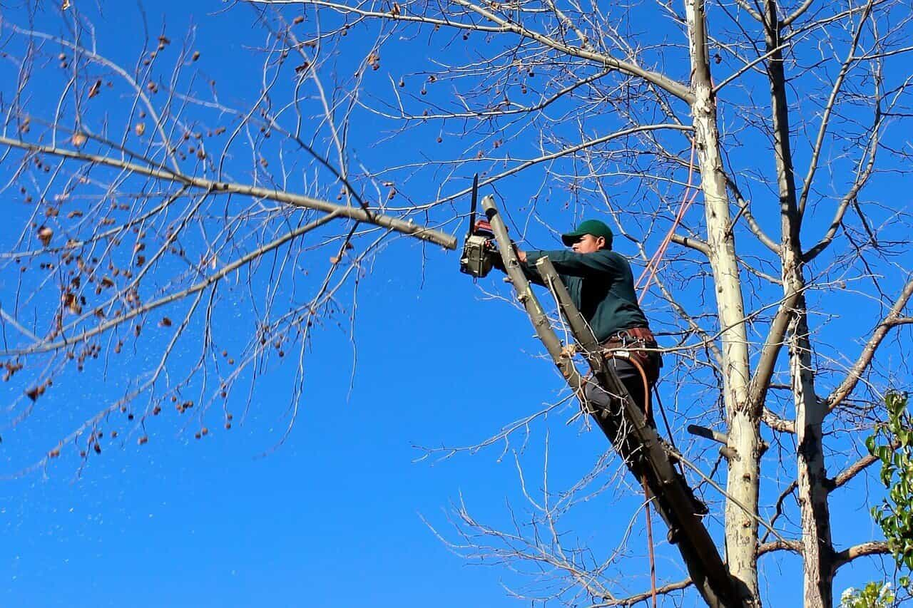 Hiring a Tree Cutting Company
