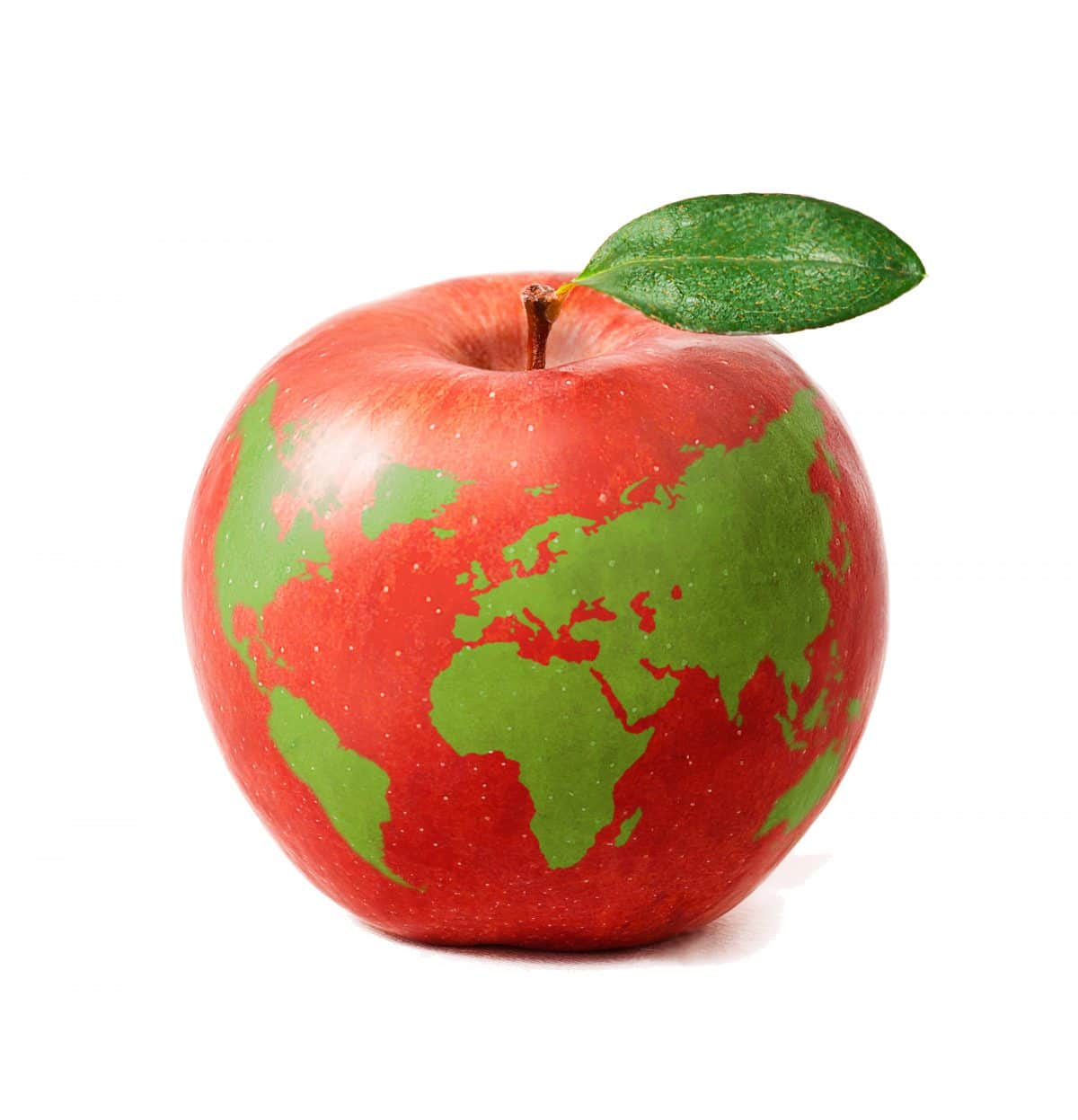 Global Food Waste Issue
