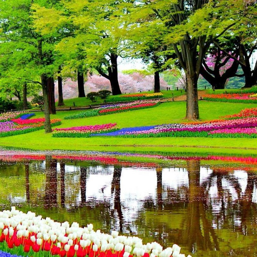 Botanical Gardens in the World