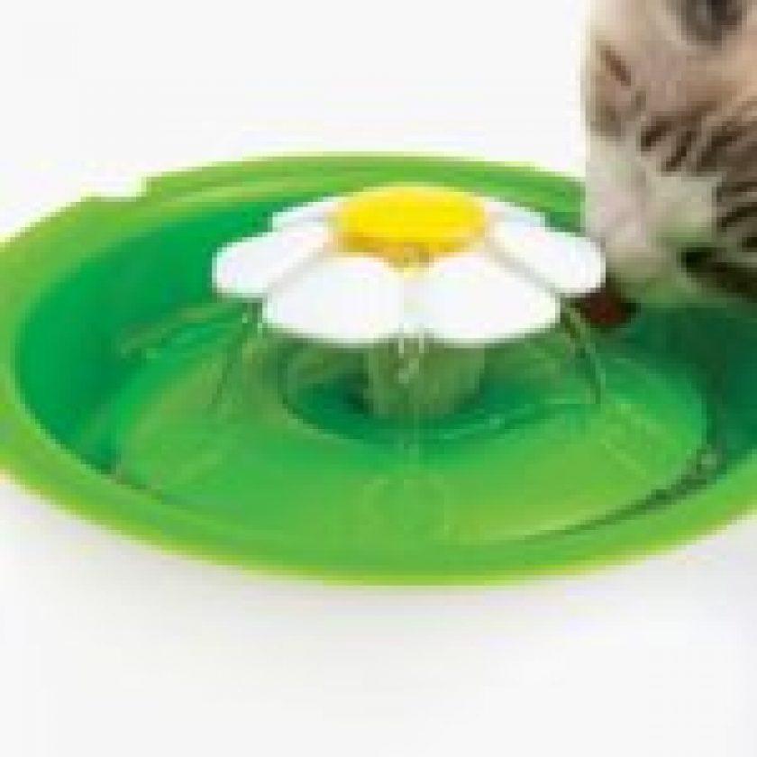 Cat-Water-Fountain 4