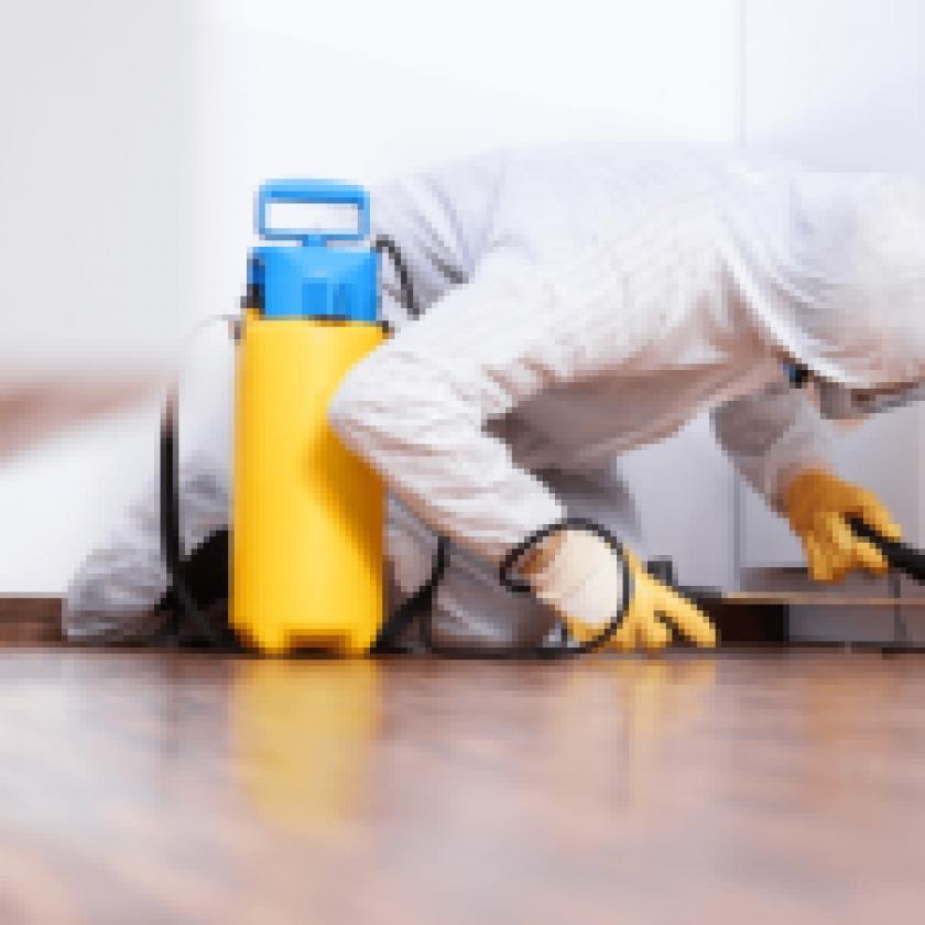 Easy Pest Prevention Tips for Every Homeowner