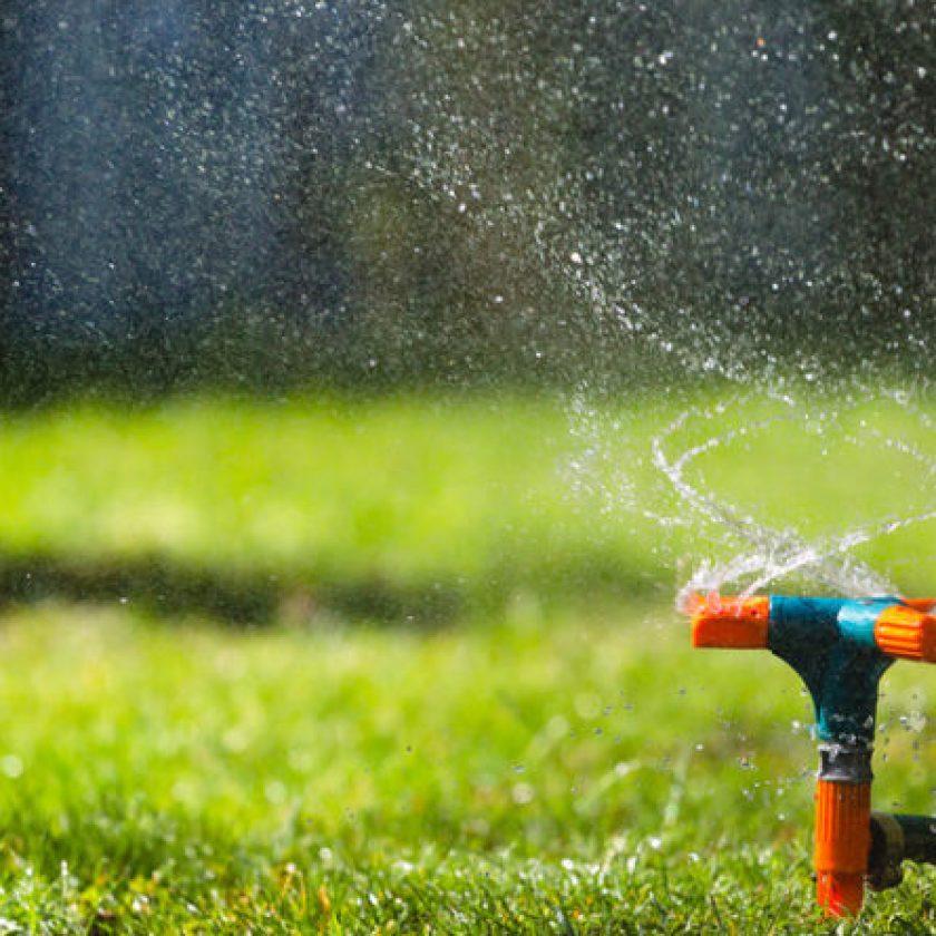 Pest Prevention Tips