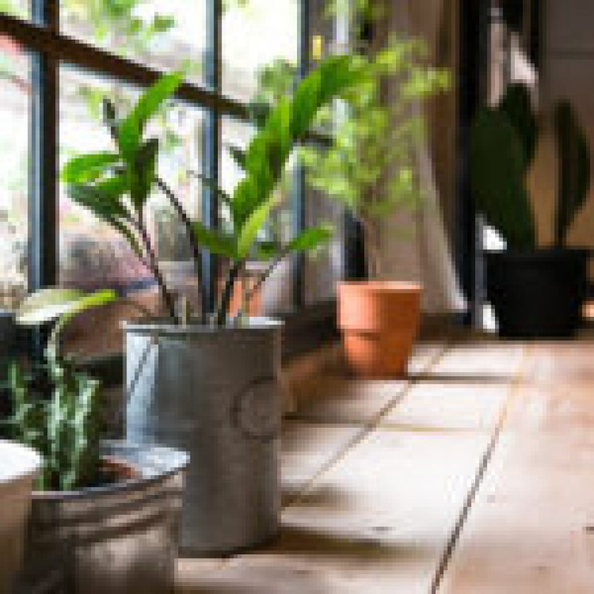 Powerful Tips Can Stop Your Plants Dying