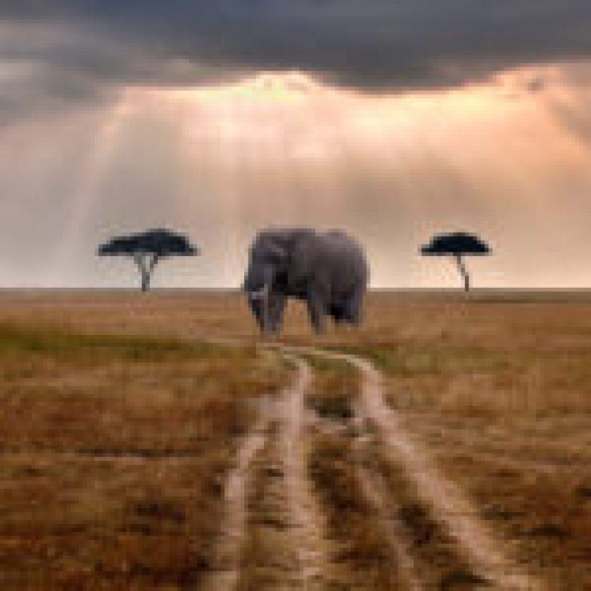 Safari-Travel-Guide-Travel-Tips