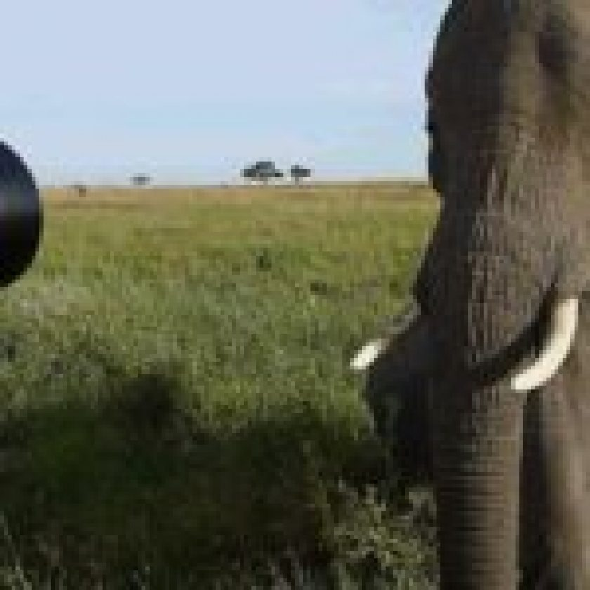Safaris Excursions