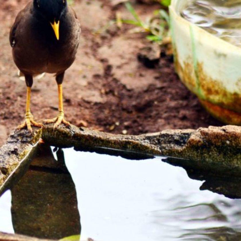Endangered Bird Species