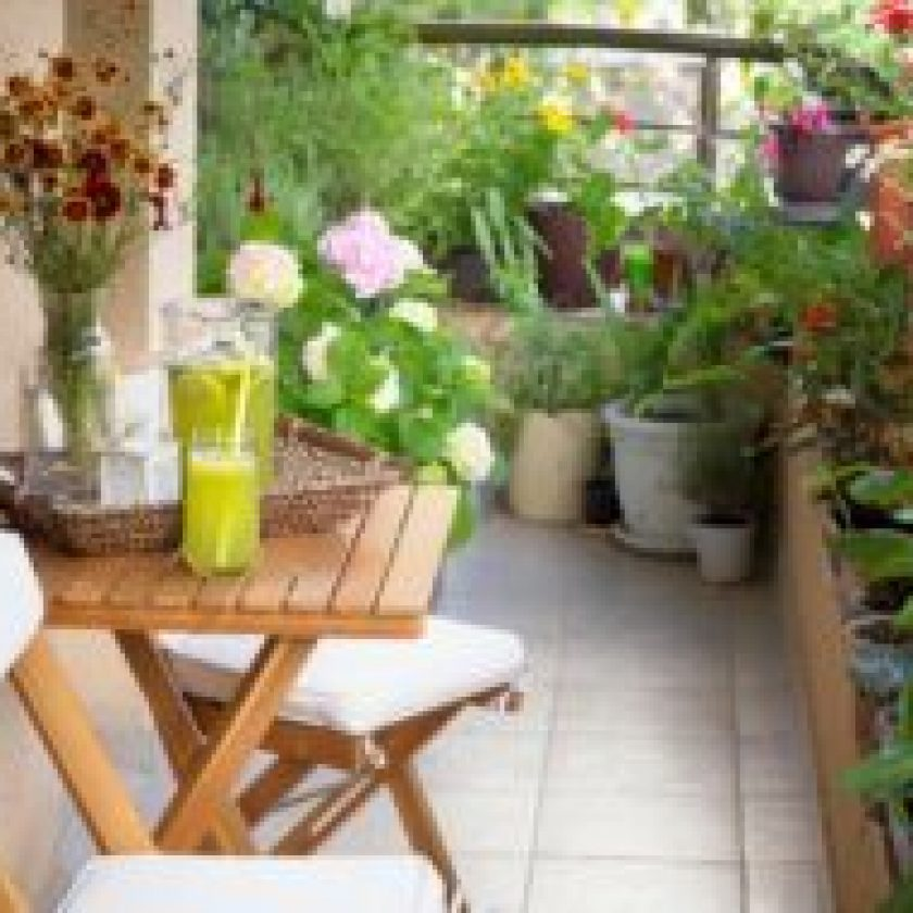 Tips and Tricks for an Amazing Garden